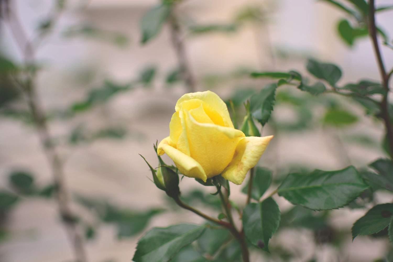 Różana rezydencja pensjonat